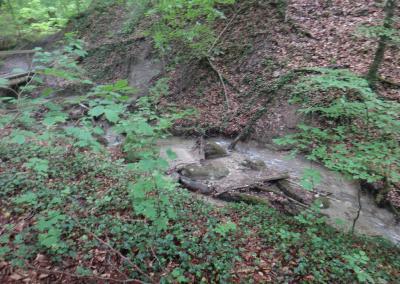 Marienschlucht-trail-2