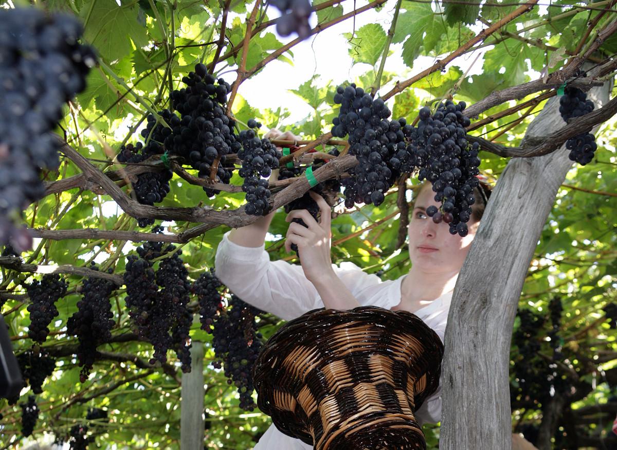 Madeira Weinfest oder der süße Portugiese im Atlantik